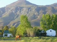 Bringing sustainability back to Greyton