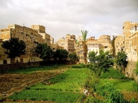 The ancient urban food gardens of Yemen